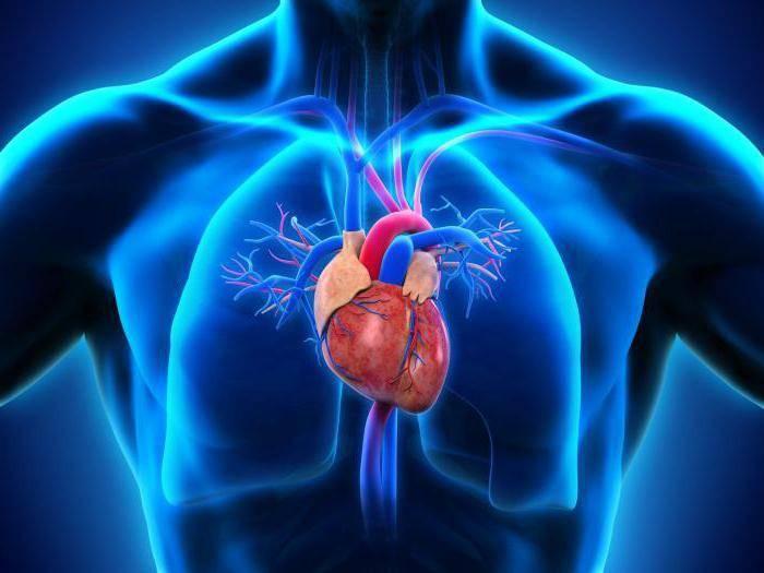 Замирает сердце. Опасно ли это? Чувство замирания сердца при всд Как лечить замирание сердца