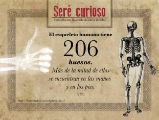 El esqueleto humano tiene 206 huesos. Más de la mitad de ellos se encuentran en las manos y en los pies (106).