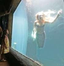 paulo-pinto-aquariosp-sereias-no-aquario-de-sao-paulo-foto-paulo-pinto-fotos-publicas201412270010