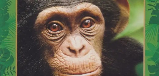 Chimpanzee,un fantastico documentario firmato Disneynature