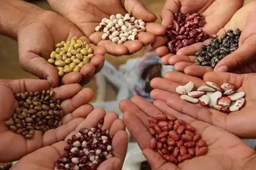 Manuale:salvare i semi e le biodiversità