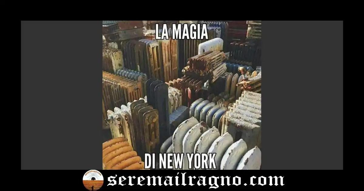 Immagini divertenti dal web: New York