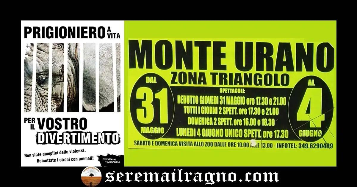 Monte Urano: petizione online per dire no al circo con animali nel nostro territorio