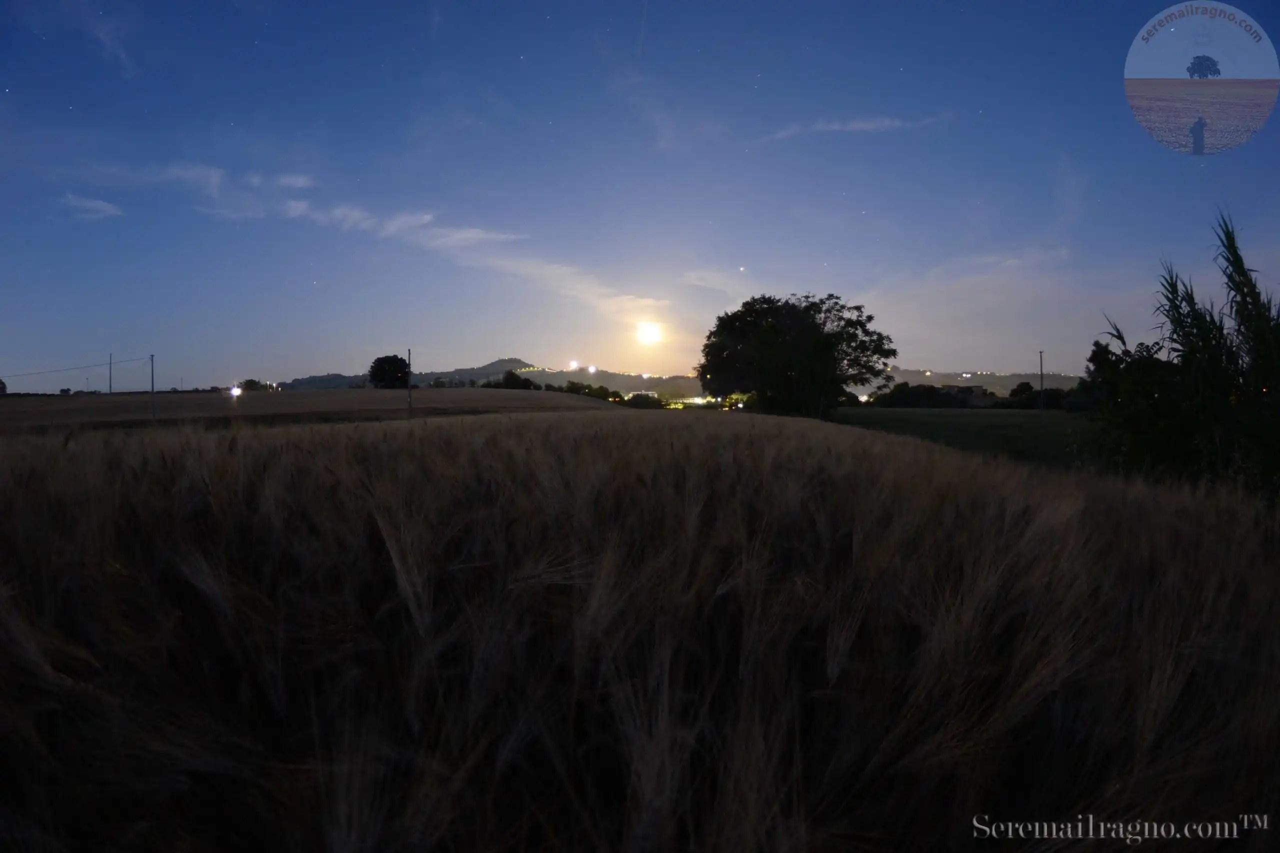 Le notti d'estate – Il grano e la luna