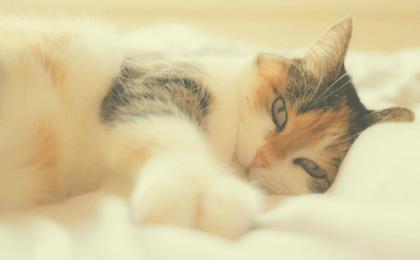 pourquoi-prendre-un-chat