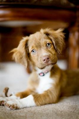 I am a good puppy, aren't I?