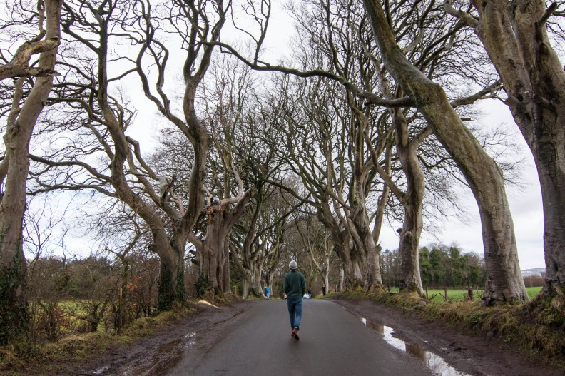 Kevin braves the Dark Hedges of Northern Ireland, a famous film location from Game of Thrones.
