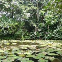 Botanique : 6 jardins d'Eden à Cuba