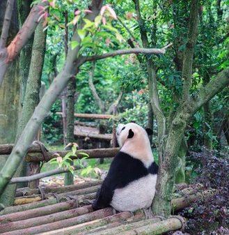 哀愁漂うパンダ