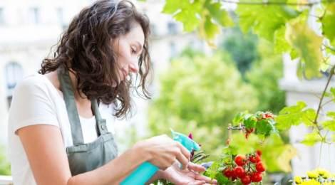 Macetohuerto, plantas fáciles para cultivar en casa