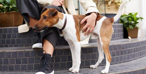 porque no puedes usar collar antipulgas perro