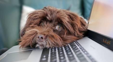 6 razones por las que deberías llevar tu perro a la oficina