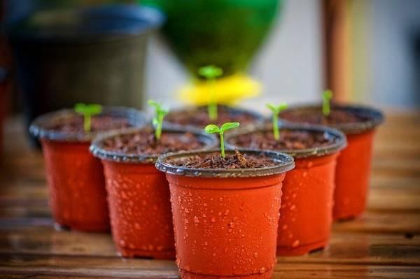 usos posos del café - fertilizante plantas