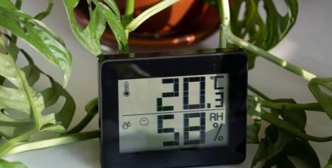 6 plantas absorben la humedad de tu casa