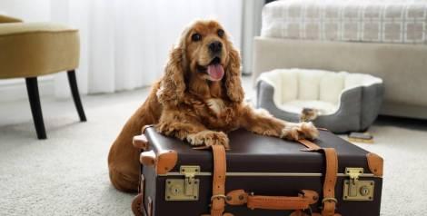 5 hoteles donde tu mascota será el rey