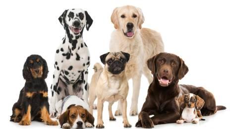 ¿Qué perro elegir según los rasgos de tu carácter?