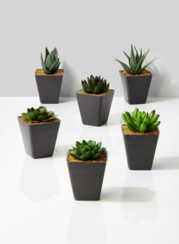 potted-succulent-in-square-pot_pfsss-029_mag