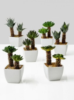 potted-succulents-fake-plants_pfsds-124_mag
