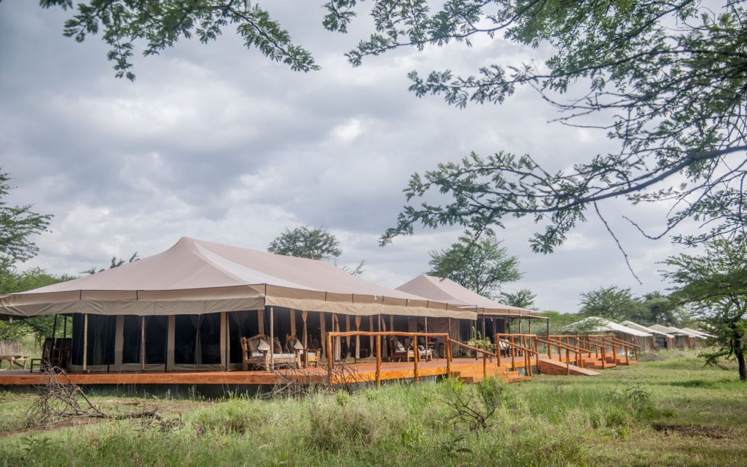 A stay with Serengeti Acacia Camps means an Excellent review for you too!