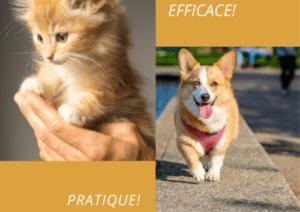 Communication canine et comportement chat