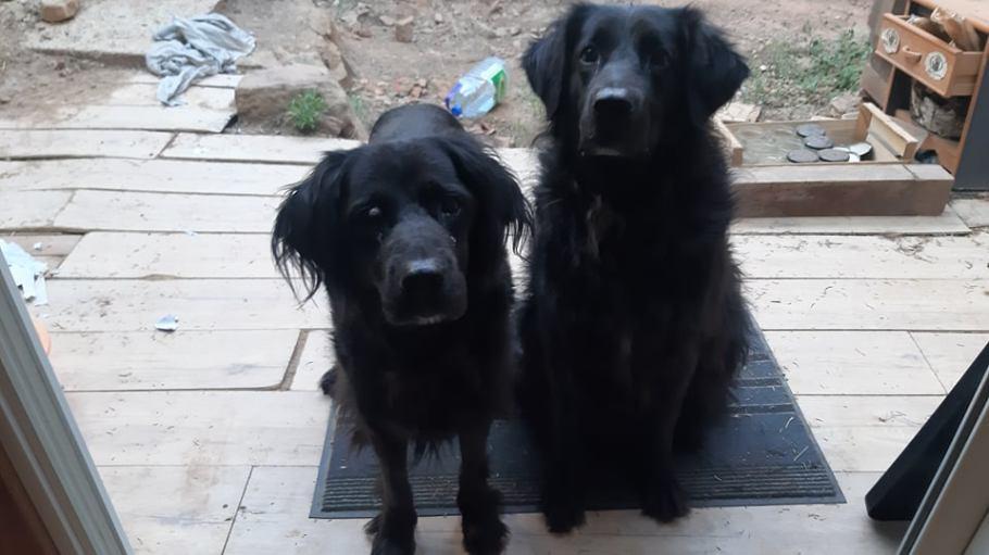Garde de chiens à Montseret Serenity Animal