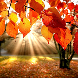 Sunshine Through Orange Leaves