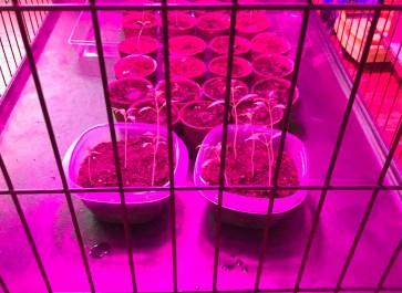 Protecting Seedlings