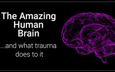 The Impact of Trauma on Brain Function