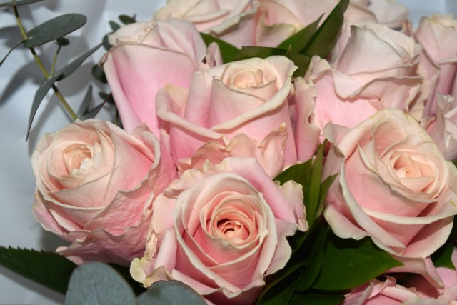 blossoming gifts - pink roses 3