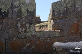 Seres Reales - Fuerte Santa Teresa (3)