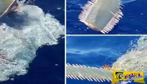Αλλόκοτο θαλάσσιο πλάσμα αναδύθηκε μπροστά τους!