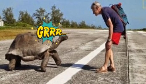 Εξερευνητής του National Geographic διέκοψε τη χελώνα από τα συζυγικά της καθήκοντα και δείτε τι έγινε