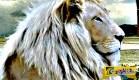 Αυτά είναι τα πιο σπάνια ζώα στον πλανήτη …