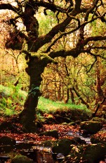 Tree on Nature trail