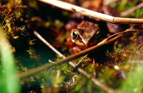 Frog on the nature trail