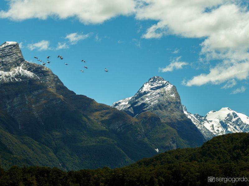 birds mountains snow new zealand