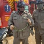 Alto Araguaia: Cobra é capturada após ser encontrada sob o motor de uma motocicleta