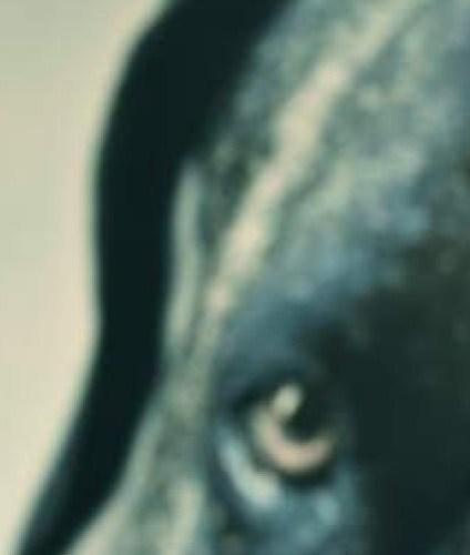 Los perros duros no bailan – Arturo Pérez-Reverte