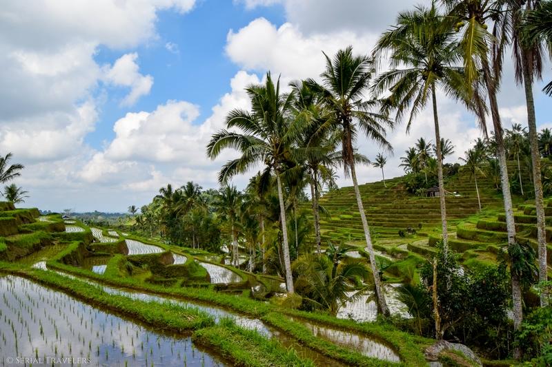 Le paradis vert des rizières de Jatiluwih