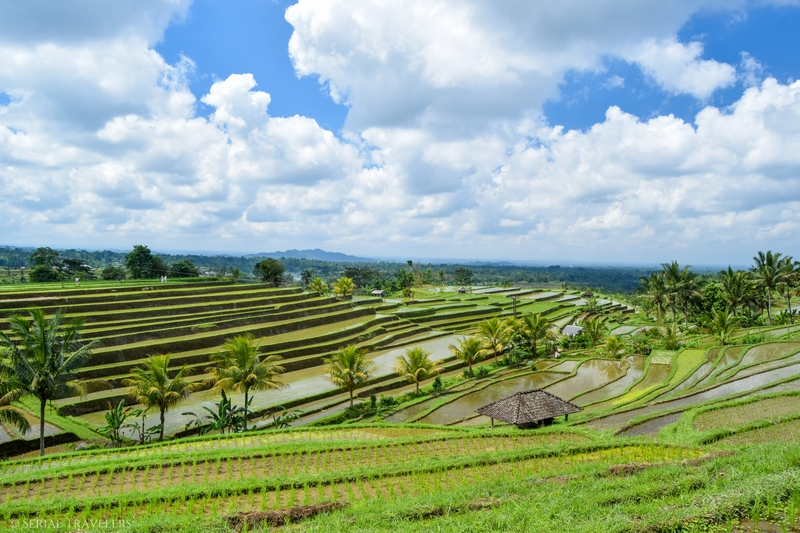 serial-travelers-bali-jatiluwih-rice-terraces(1)