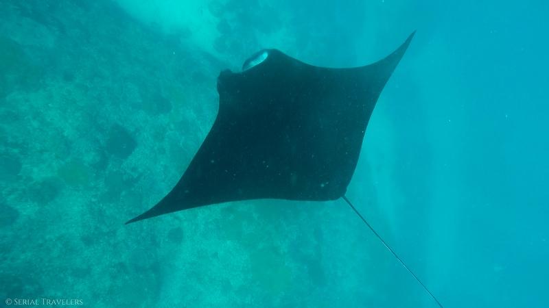 Nager avec les raies Manta à Nusa Penida