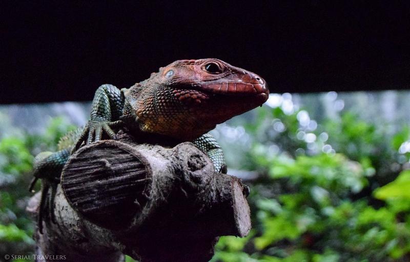 serial-travelers-blog-zoo-singapour-singapore-14