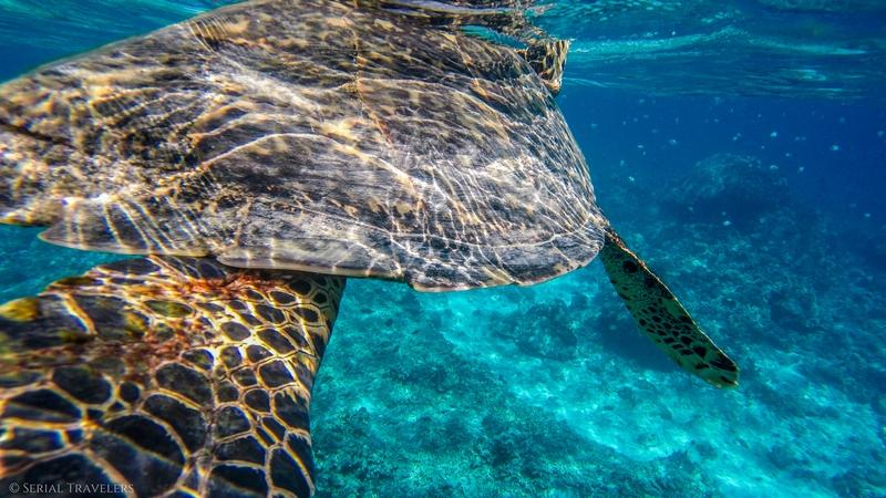 Snorkeling aux Gili Islands