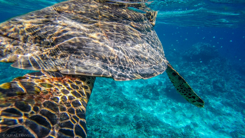 Snorkeling aux Gili Islands