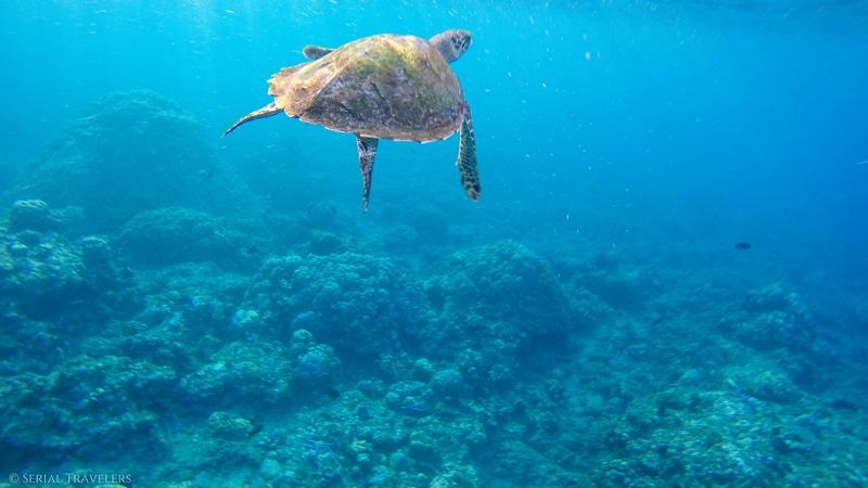 Les meilleurs spots de snorkeling à Amed