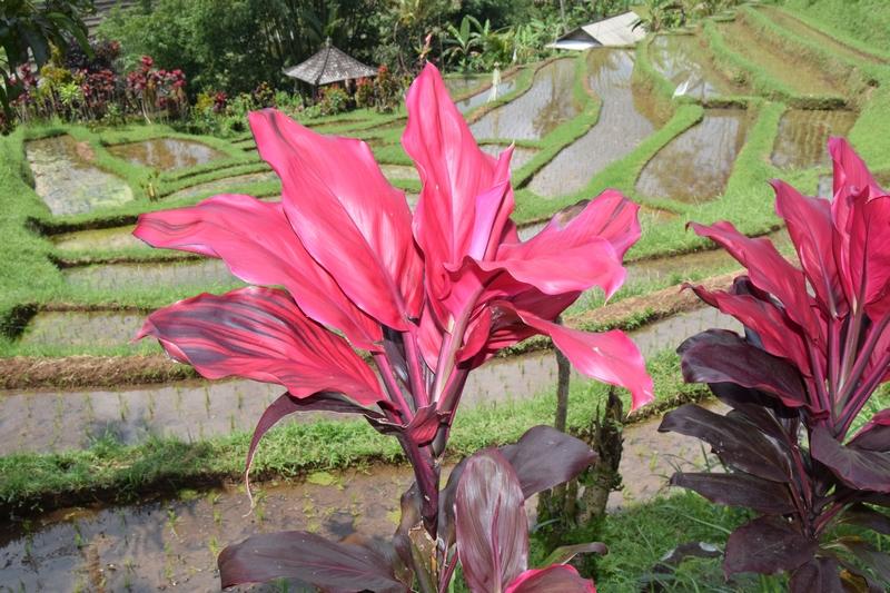 serial-travelers-fleurs-bali (2)