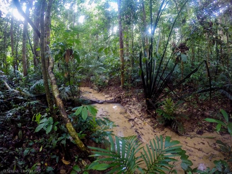 Into the Wild : trek de 2 jours et 1 nuit dans la jungle du Taman Negara