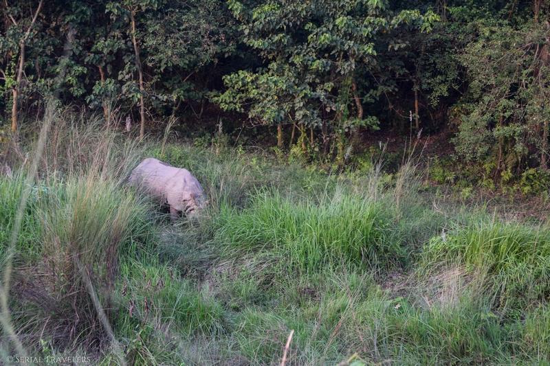 Chitwan National Park : sur les traces du tigre