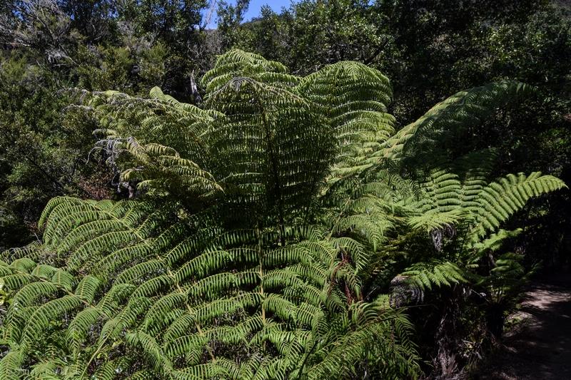 serial-travelers-nouvelle-zelande-roadtrip-randonnee-abel-tasman-fougere-arborescante
