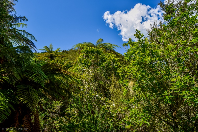 serial-travelers-nouvelle-zelande-waimangu-volcanic-valley3